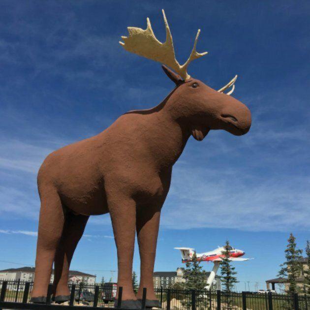 Mac the Moose standing tall in Moose