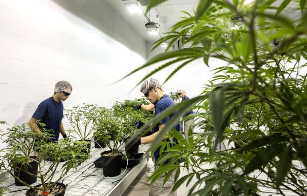 Employees work at the Canopy Growth Corp. facility in Smith Falls, Ont. on Dec. 19,