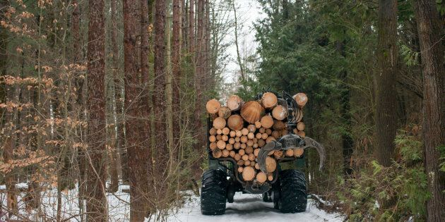 A logging operation in Southern Ontario.