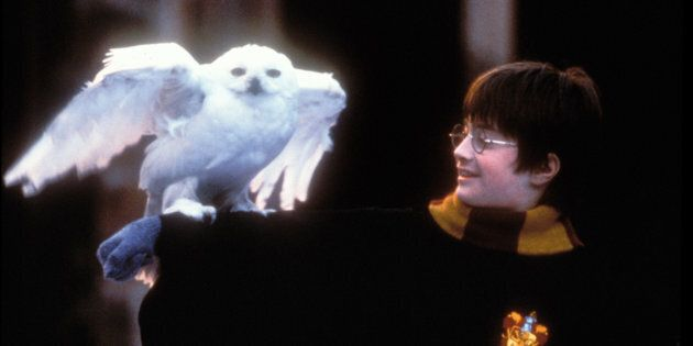 Actor Daniel Radcliffe as Harry Potter from the movie franchise.