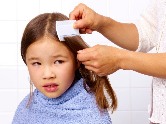 Lice are a pain in the ass, but not dangerous.