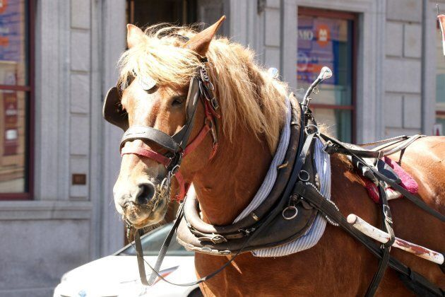 Horse driven carriage in Old Montreal Que. on June 17,