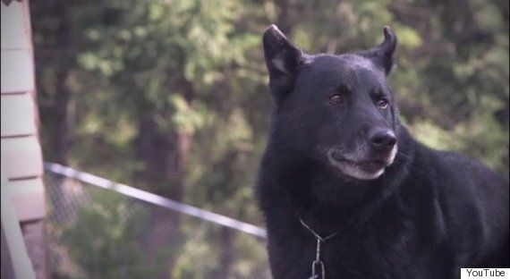 Sako, B.C. Dog Who Saved Teen Owner's Life, Inducted Into Purina Hall Of