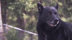 Hall of Fame Honours B.C. Dog Who Saved Teen's