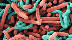 Probiotics May Be The New