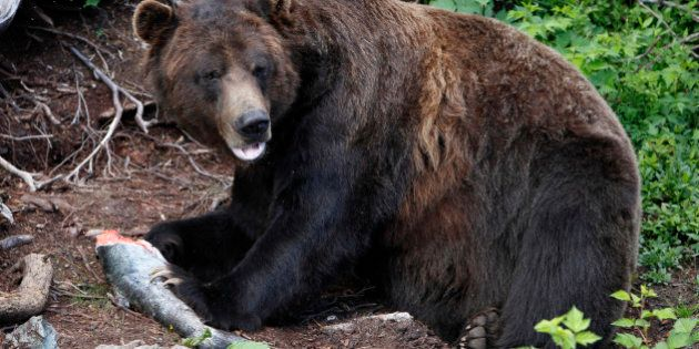 Andrew Weaver Calls For Changes To Grizzly Bear Hunting In