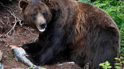 B.C. Bear Hunters Should Be Forced To Take Meat Home: