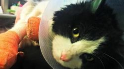 Abused Cat Dubbed 'Bruce Almighty' On His Way To