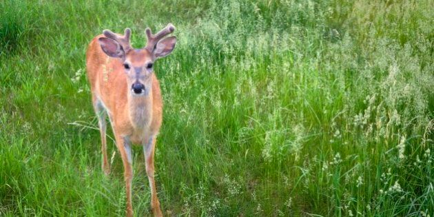 Town Fines Woman $233.95 For Feeding Deer In Own