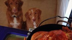 LOOK: Your Pets Love Thanksgiving Dinner,