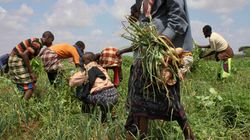Agricultural Development Plants the Seeds for Long-Term Poverty