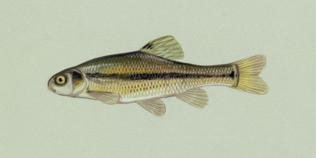 Birth Control Pill Affecting Fish's Ability To