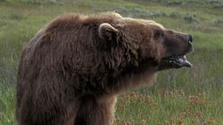 Man Mauled By Bear, Shot In Rescue