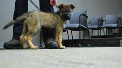RCMP Puppy Dies From Surgical