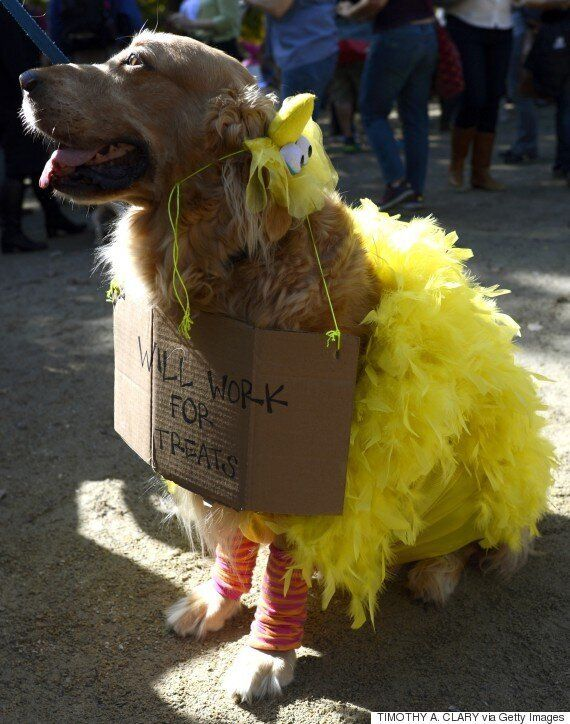 Definitive Proof Dogs Are Better At Halloween Than