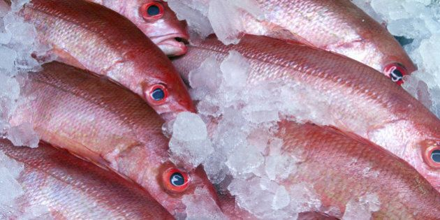 Fish Incorrectly Labelled For 'Better Profits' In