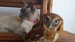 Owl And Cat Are Friends, And All Is Right With The
