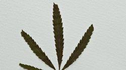 Canada's Largest Addiction Centre Backs Legal