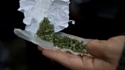Canada's Medical Pot Users Turning To Black Market: