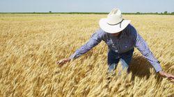 Canadian Wheat Board Privatized With Sale To U.S., Saudi