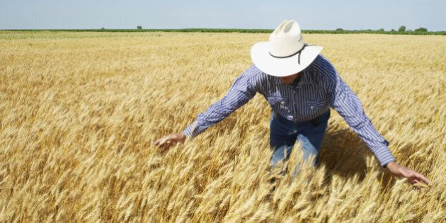 Canadian Wheat Board Privatized With Sale To G3 Global Grain