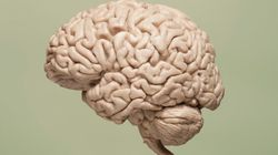 Your Brain Is A Smart Organ When It Comes To Fat