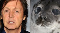 McCartney Again Speaks Out Against Canada's Seal