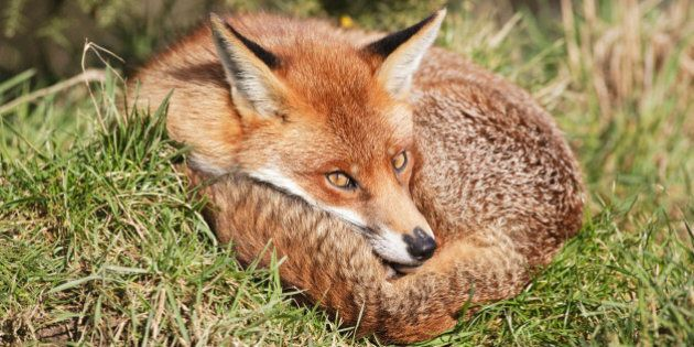 The Fur Industry Has a Very Dark