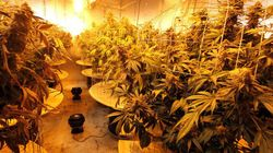 Medical Pot Growing Comes To
