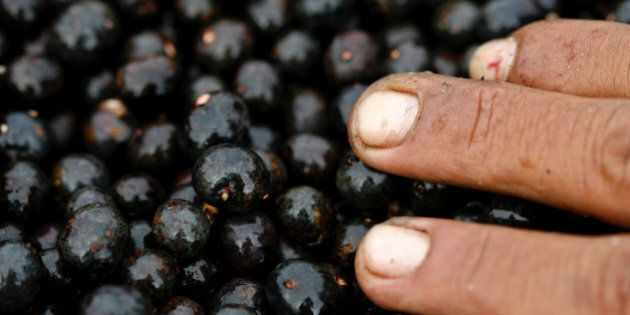 ** FOR USE WITH AP LIFESTYLES ** Acai fruits are seen for sale at a market in Belem, Brazil, May 14, 2007.  Virtually unknown outside this remote corner of Latin America's largest nation until 15 years ago, acai juice suddenly is a global