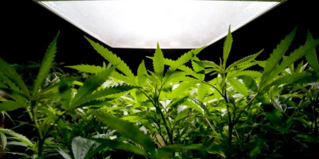 Grow-Ops' Pungent Odors Targeted By Langley
