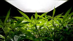 Stinky Grow-Ops Targeted By Langley