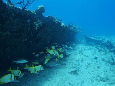 Florida's Favourite Road Trip Wreck Dive Site Has a Birthday