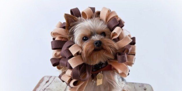 Halloween Pet Costume Ideas: 30 Adorable Looks For Your