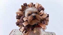 30 Cute Costumes For Pets That Will Make You Want More