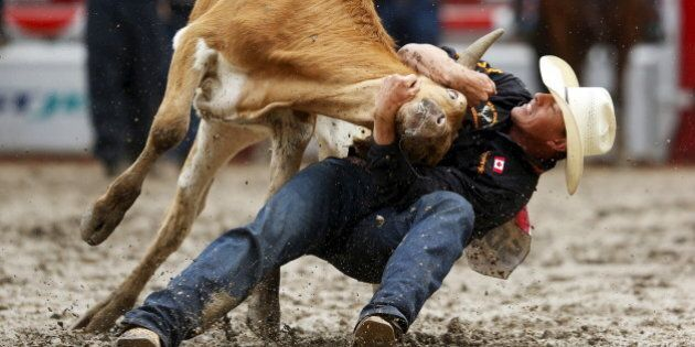 Cody Cassidy of Donalda, Alberta wrestles a steer in the Steer Wrestling event during Championship Sunday...