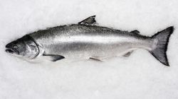 Government Failed To Notify Public Of Salmon Virus: