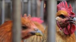 Canada Expands Poultry Restrictions As Avian Flu