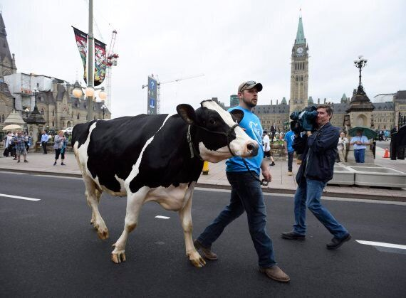 Canadian Farmers Protest Dairy Regulations On Parliament