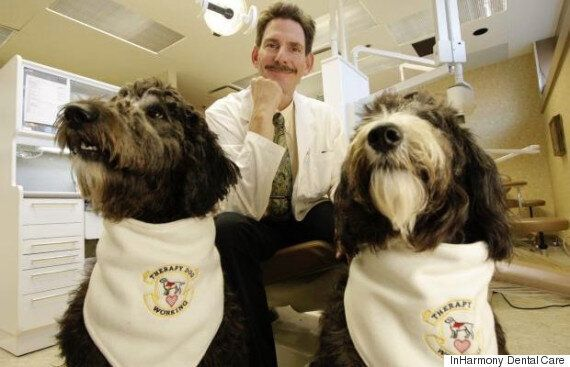 Therapy Dogs At Victoria Clinic Help Ease Patients' Fear Of The