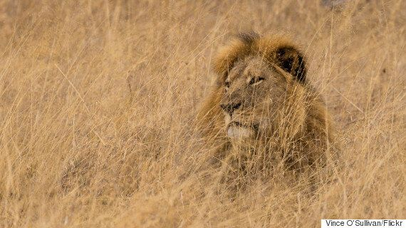 Trophy Hunting Show In Ontario Draws Ire Of