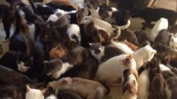 Nova Scotia Man Calls For Help After 66 Cats Overtake