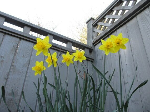 A Gardener's Ode To Spring And Celebrating