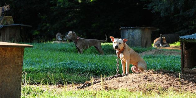 In this Aug. 23, 2013, photo provided by the ASPCA, dogs sit at a home in Auburn, Ala. A federal and...