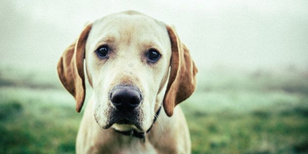 Sad and cute dog close-up.