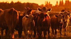 Canadian Ground Beef Could Soon Be Treated With