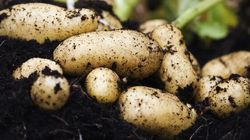 9 Foods That Will Make Your Garden's Soil