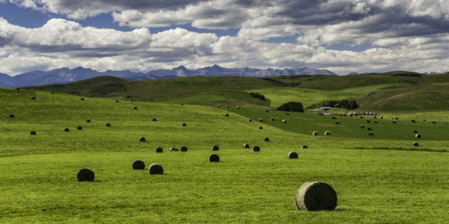 Alberta Ranchers To Conserve Huge Tract Of Native