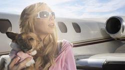 The Haute Dog's Guide To Cannes