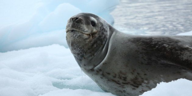 It's Time for Canada to Support a Fair Seal Industry